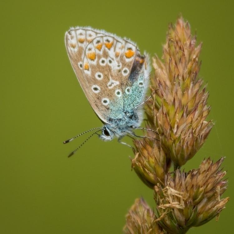 Wings - nature, macro, nikon, photography - peter_skoglund   ello