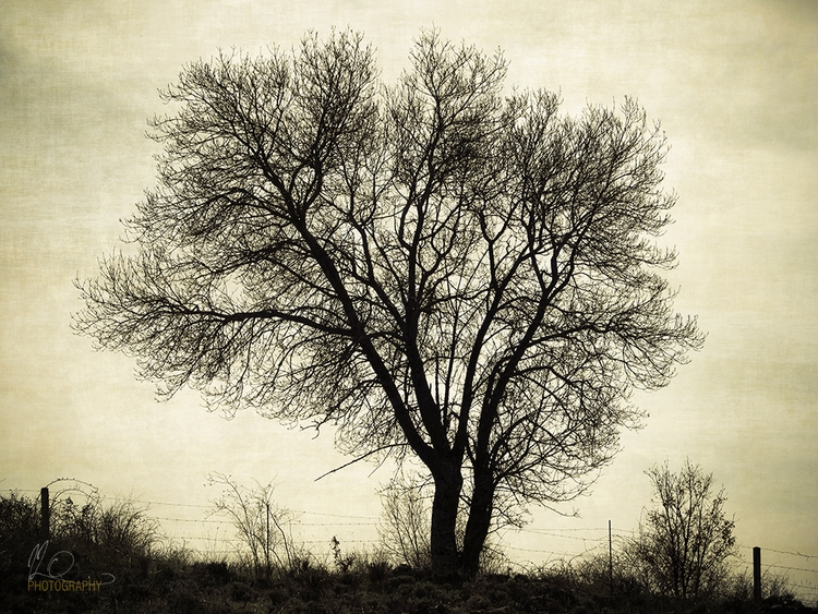 tree hill. Artistic monochrome  - ilodesigns | ello