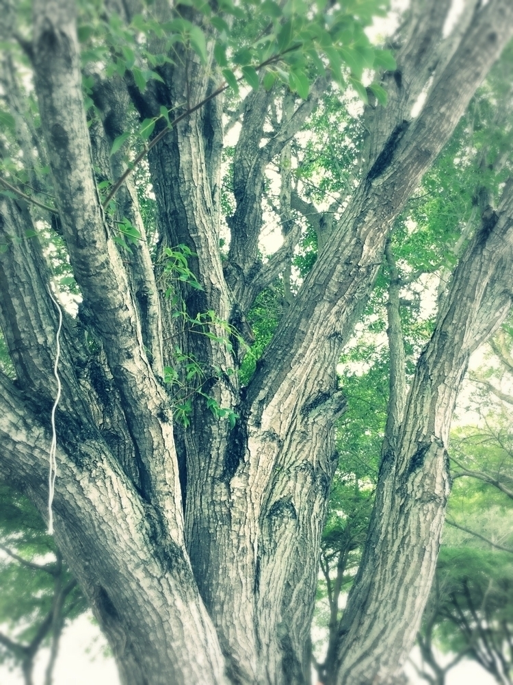 String Hanging Tree Apps - mikefl99 - mikefl99   ello