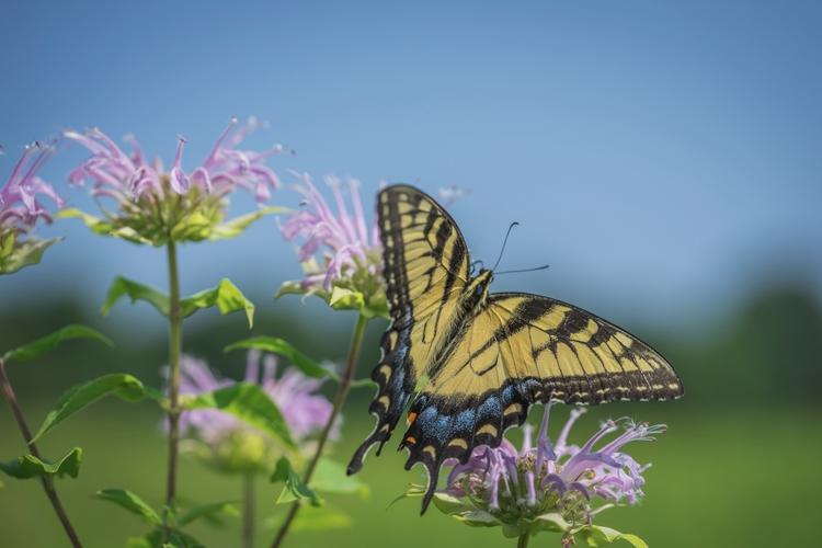 Flutters* wandering Meadows Lon - jeffmoreau | ello
