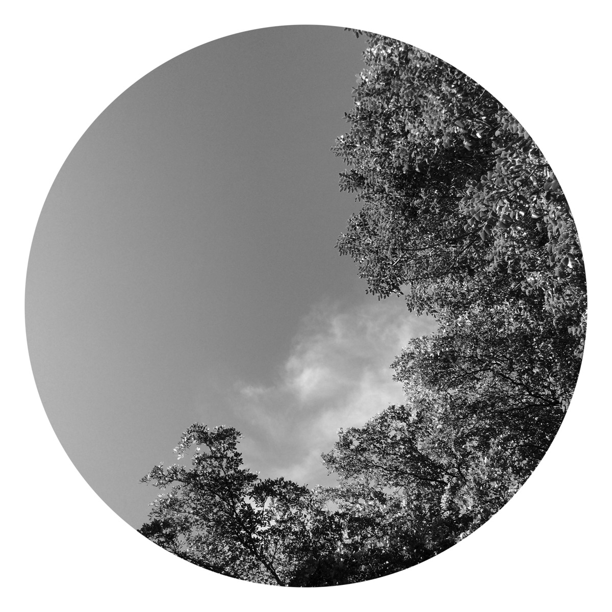 Cloud Moving Tree Apps - mikefl99 - mikefl99 | ello