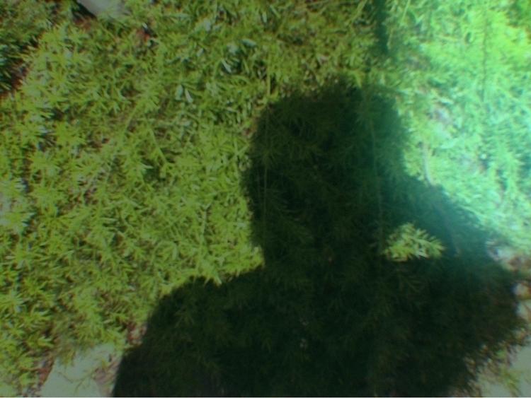 Shadow Apps - mikefl99, ello, ipodphotography - mikefl99 | ello