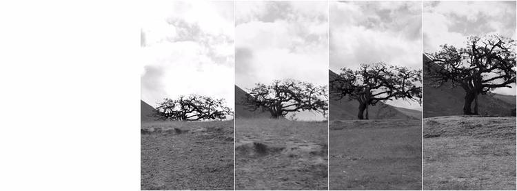 tree great love story... El Lec - tamyts   ello