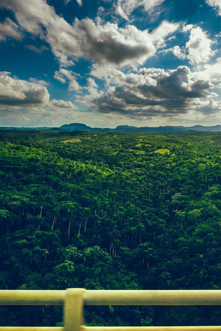 jungle - Puente-de-Bacunayagua, Cuba - christofkessemeier | ello