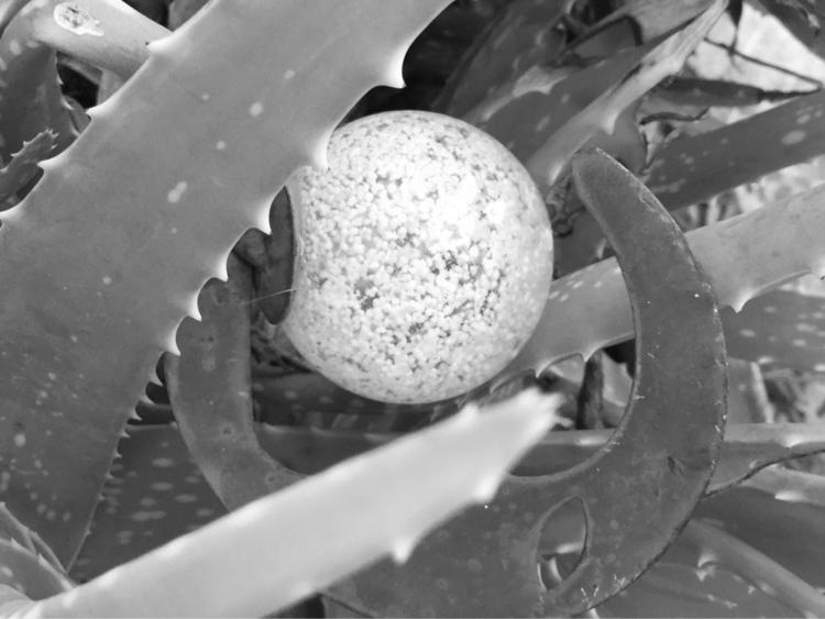 Deep Aloe Plant Apps - mikefl99 - mikefl99   ello