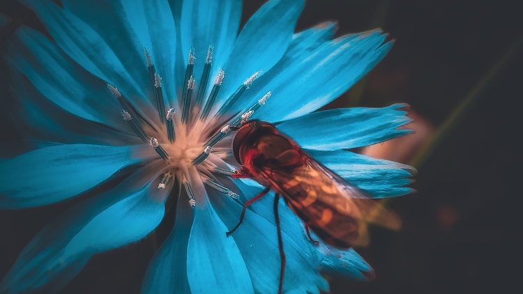 insect, insects, art, macrophotography - beheroght | ello