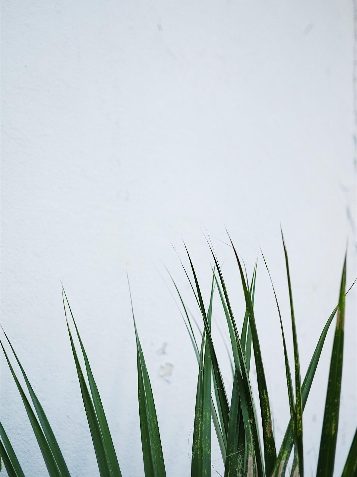 Rise - modern, minimal, botanic - thecontentsco | ello