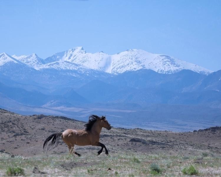 Sulphur Springs Wild Stallion L - bitfactory | ello