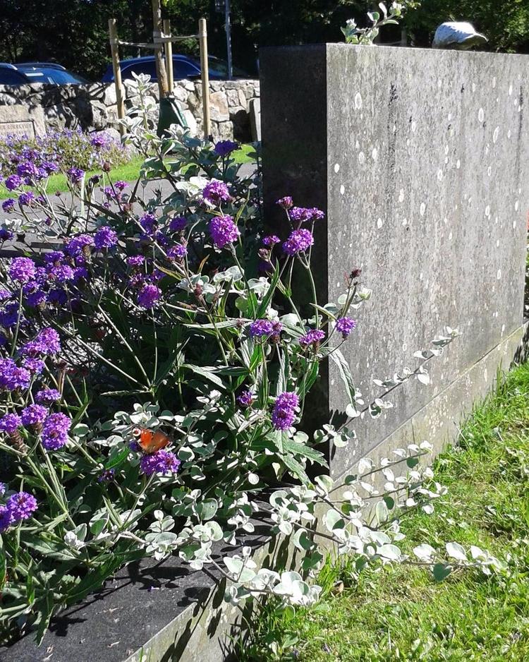 Levande fjärilar blommor bland  - skogskyrkogardar   ello
