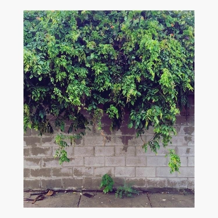 Overhang - photography, urbanplantlife - timmcfarlaneart   ello