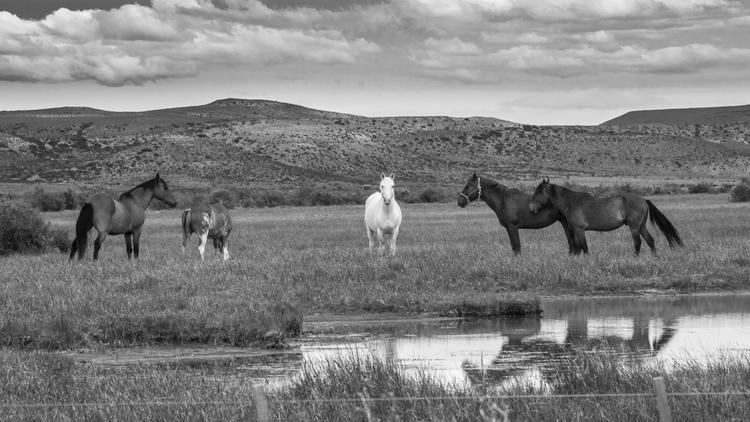 landscape Santa Cruz, Patagonia - educarbonetti | ello