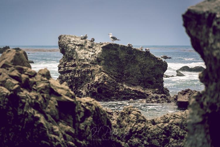island arrived Laguna Beach bit - scorpioonsup | ello