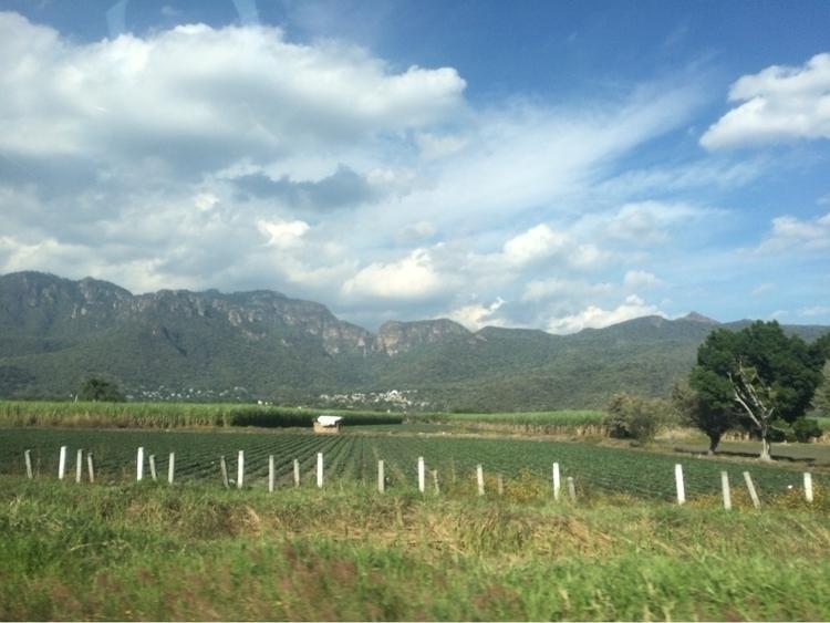 bit hope - green, landscape, followme - isabelrobles | ello