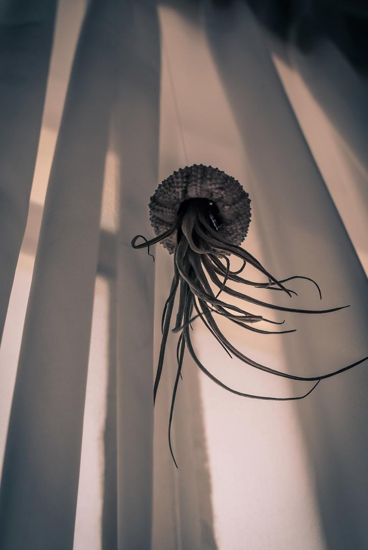 medusa - ne018 | ello