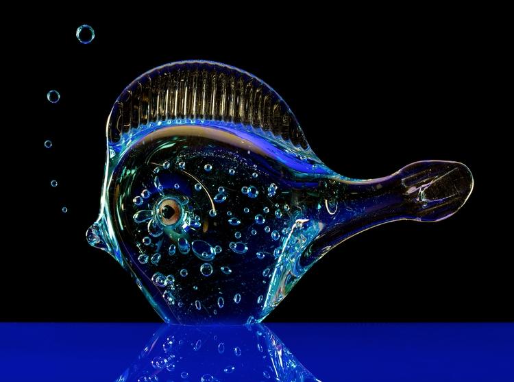 fish sea - bradverts | ello