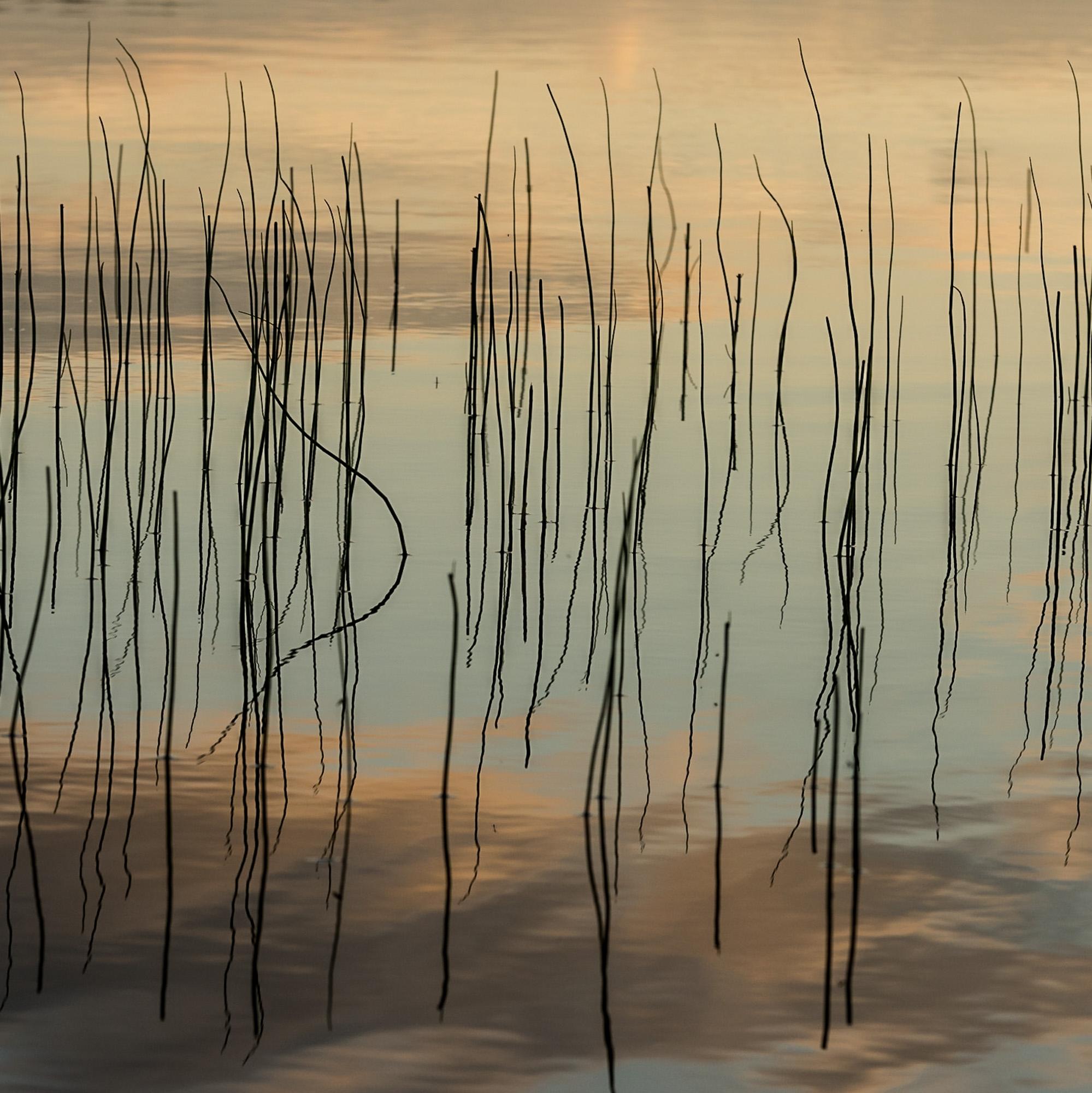 summer textures - nature, natureart - peter_skoglund   ello