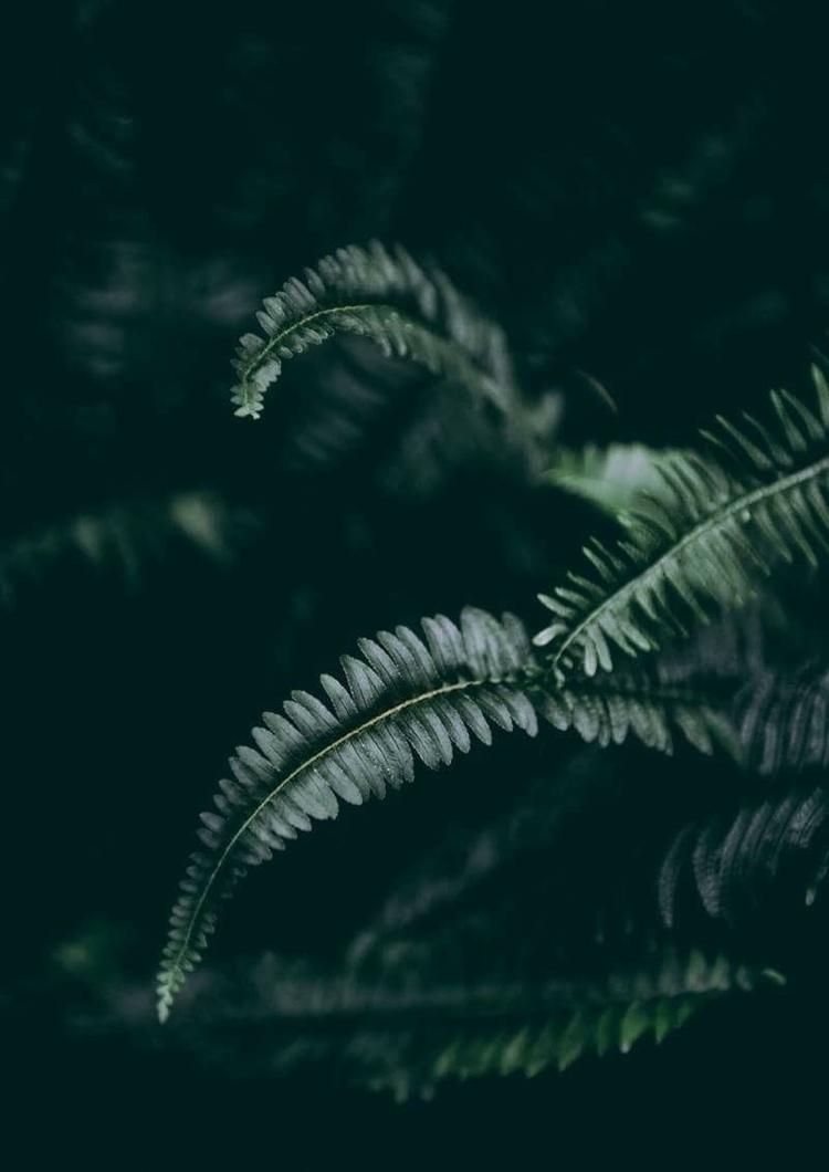 Dark Foliage 1 2   Fine Art Pho - elementalprints   ello
