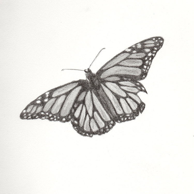Monarch 2. Project - 103, monarch - mydiagonallife | ello