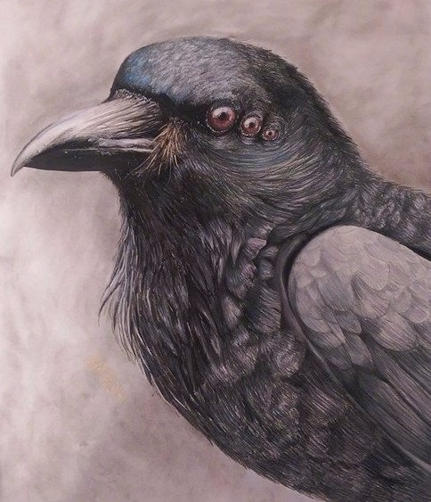Raven 2014 India ink, chalk pas - alexismarhanka | ello