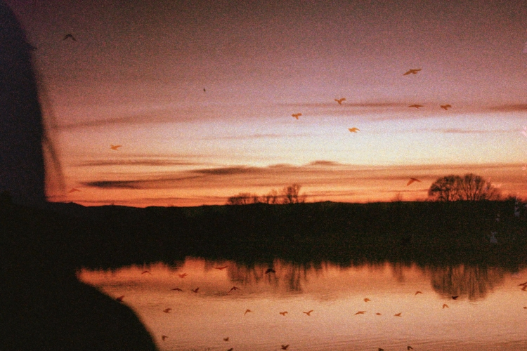 warmth - birds, sunset, photography - coldd_desert | ello