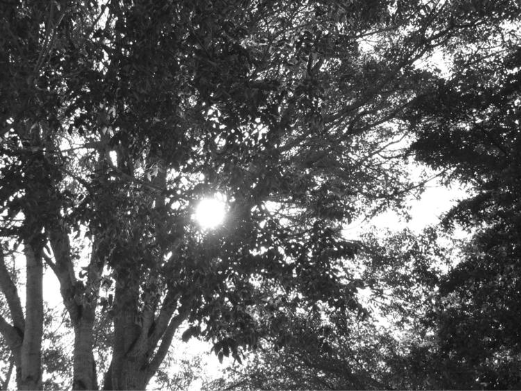 Morning Sun Peeking Branches Ap - mikefl99 | ello