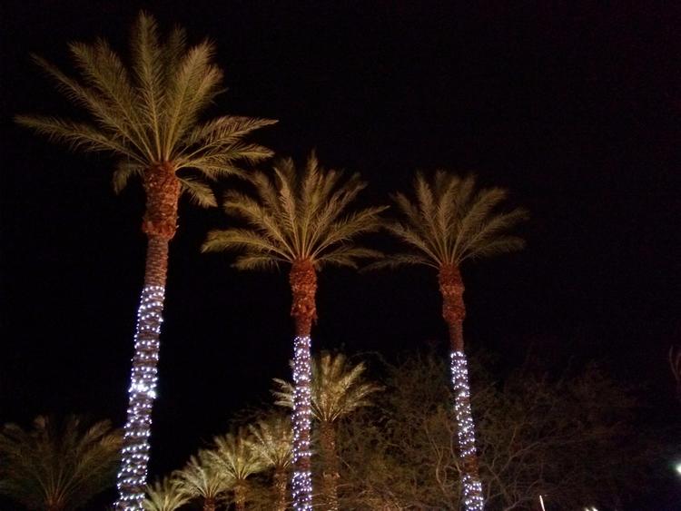 Night Time Palm Illusion - markpain | ello