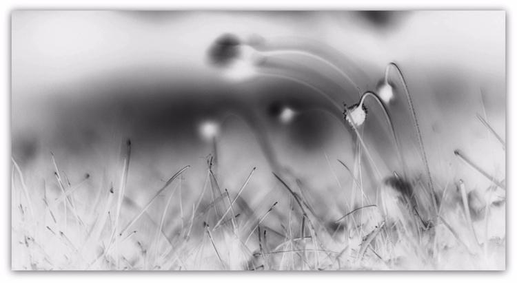 lying grass, III - photography, bw - voiceofsf | ello