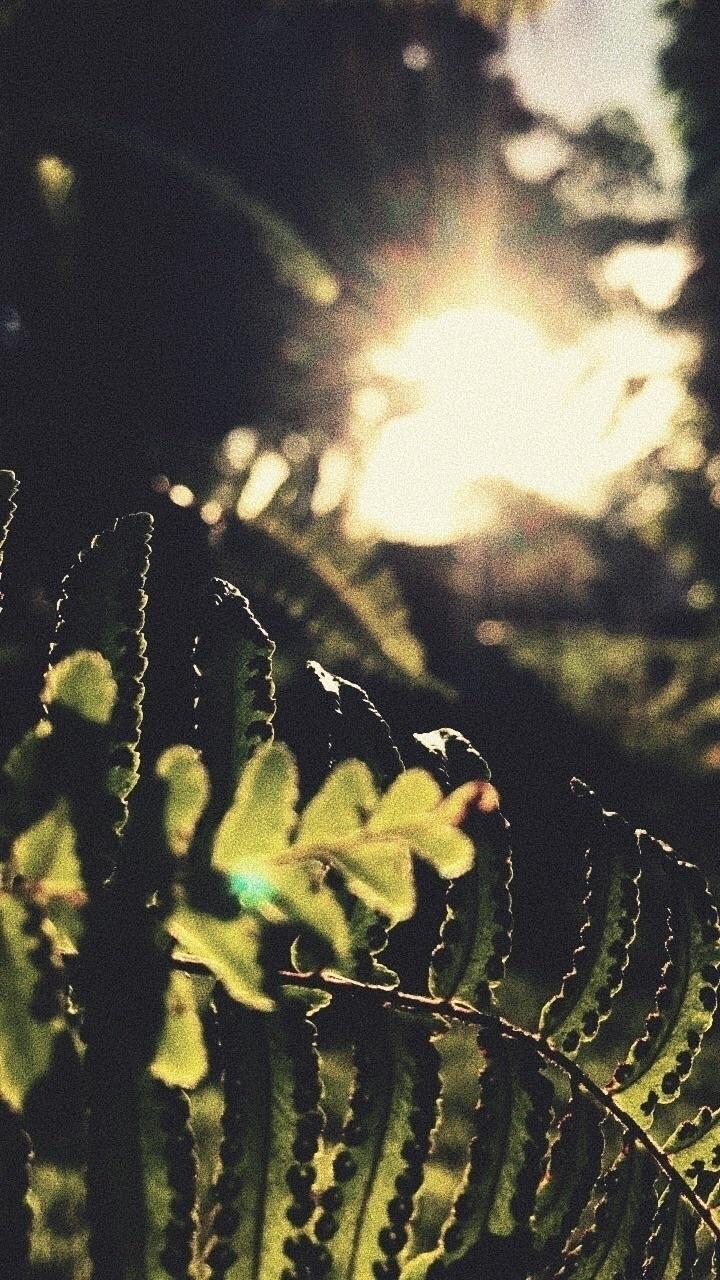 sunshine#green - yomaira | ello