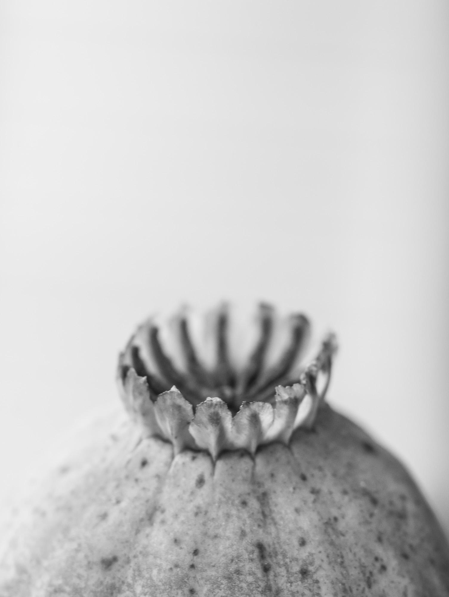 seedcase - nature, natureart, botanical - peter_skoglund   ello