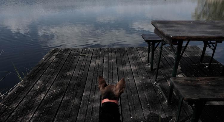 animal, dog, nature, lake, water - blackwyrt | ello