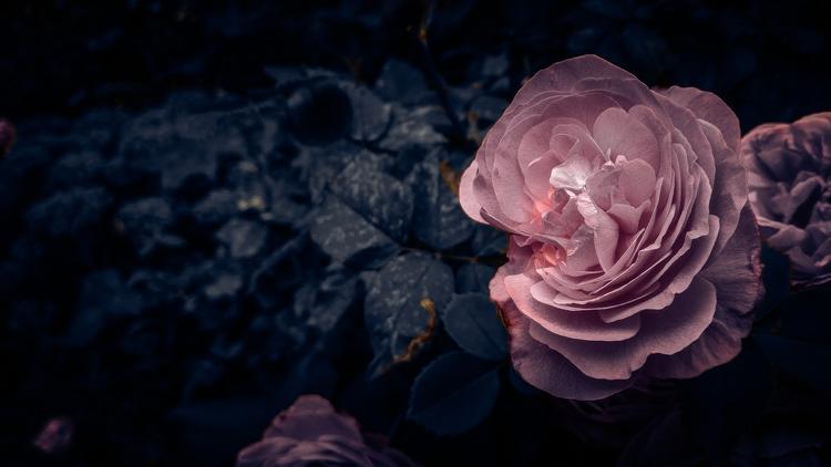 ️ - natureloversgallery, flower - beheroght | ello