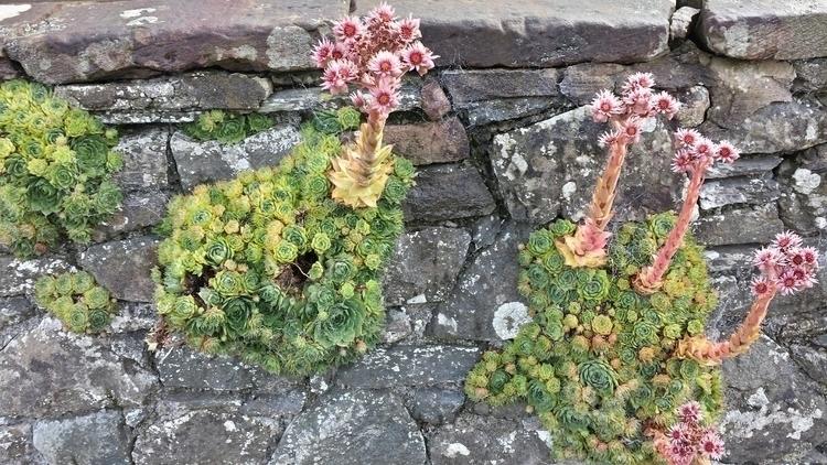Interesting plant Lake District - englisholdbiker | ello