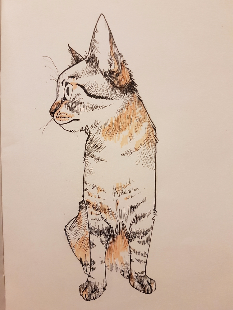Cat - emmapetermann | ello