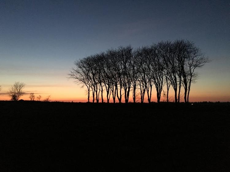 Goodnight trees - iktel   ello
