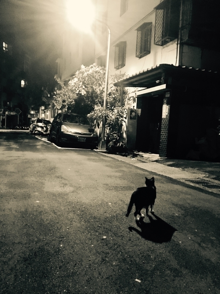 road.#photographs - kitten, cat - zerounivers | ello