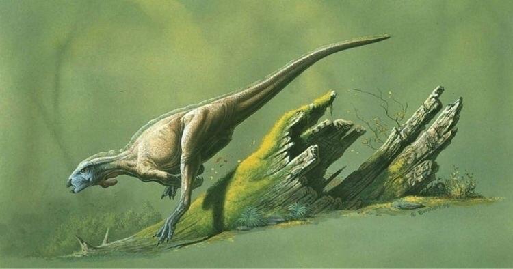 Art John Bindon - dinosaur, dinosaurs - dinosaursart | ello
