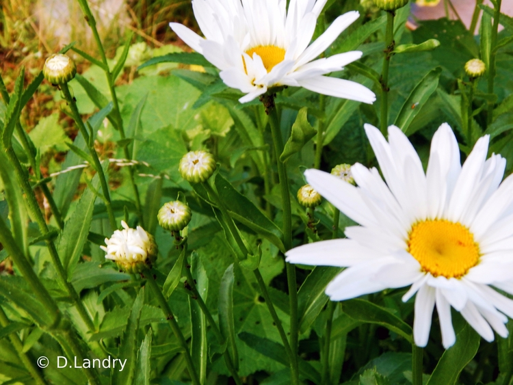 garden Dans mon jardin - denysel | ello