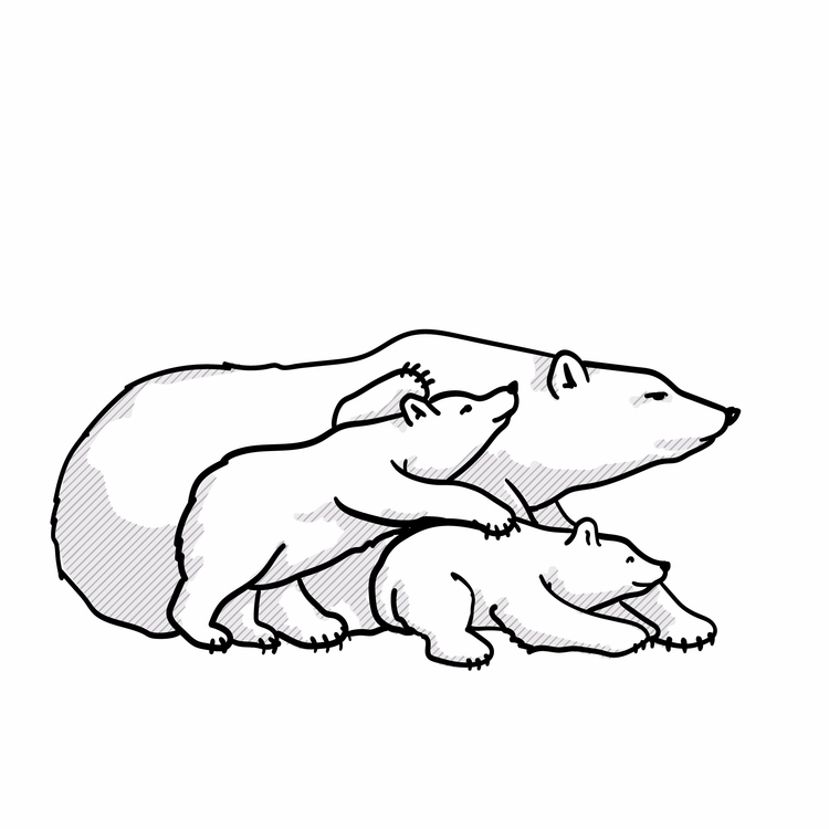 Polar Vision Manitoba Bears. im - dawombat | ello