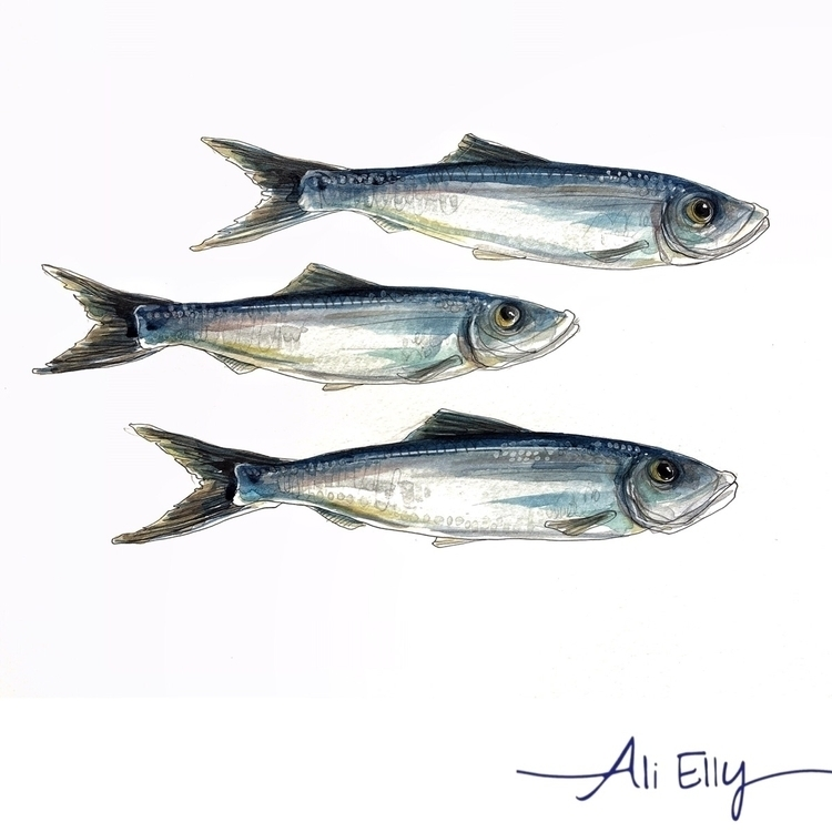 sardines, seafood, fish, nautical - aliellydesign | ello