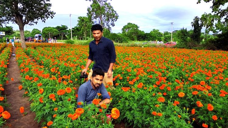 Marigold ( mallika ) flower Far - sakkeerpoozhithara | ello