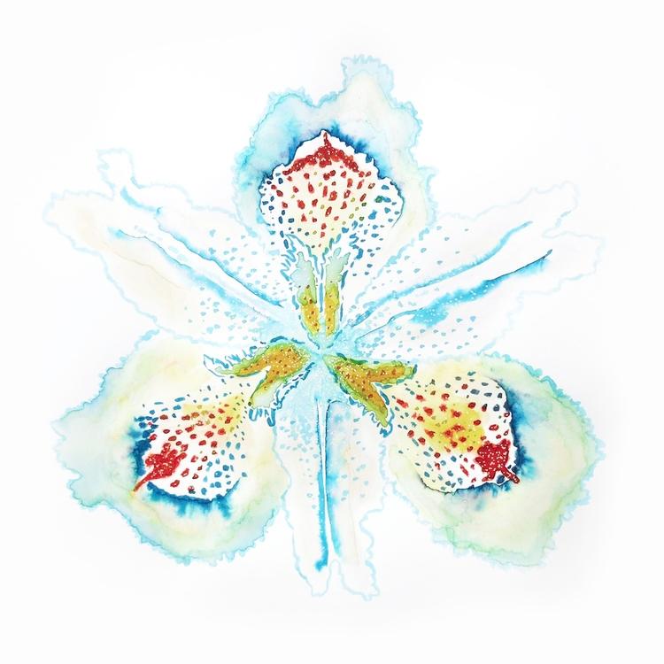 Iris japonica (蝴蝶花, hu die hua - flavioscutti | ello