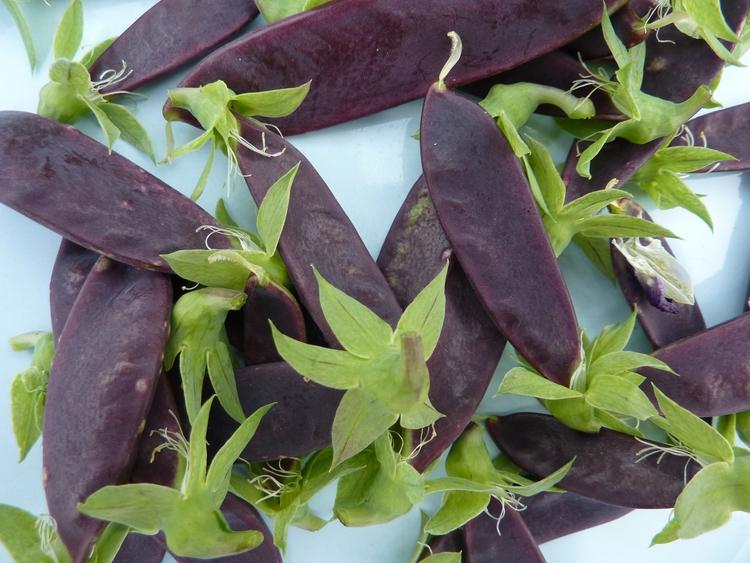 1 + 2: Mangetout 2013 grow year - firehorsetextiles | ello