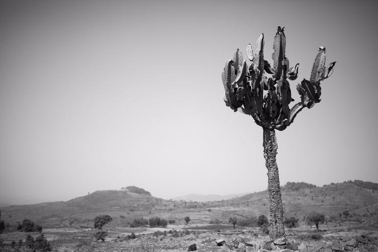 blog post - Wild nature Ethiopi - victorbezrukov   ello