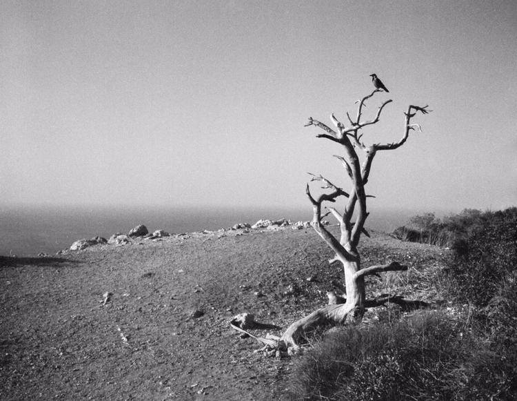 Kodak Portra 400 film black whi - victorbezrukov   ello
