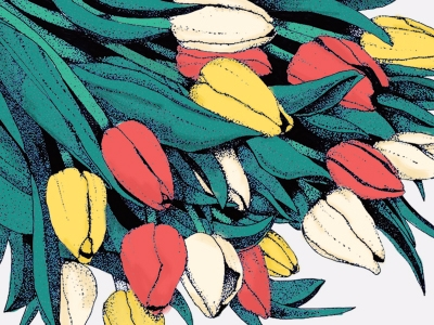 Tulips - flowers, illustration, traditional - shelbyrreynolds | ello