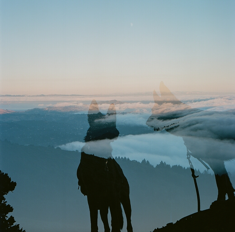 malinois, shotonfilm, doubleexposure - teetonka | ello