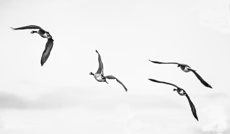 birds flown - artmen | ello