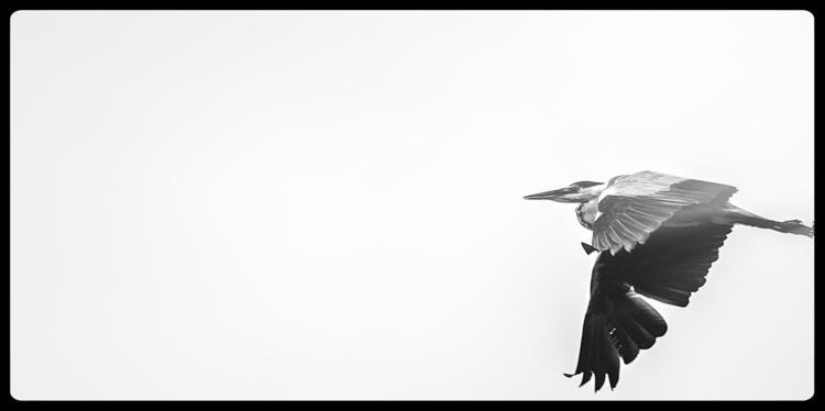 accident Heron picture - artmen | ello