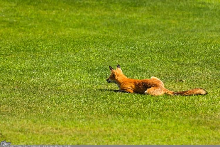 Fox beach day today Fire Island - dangrabbit-photography | ello