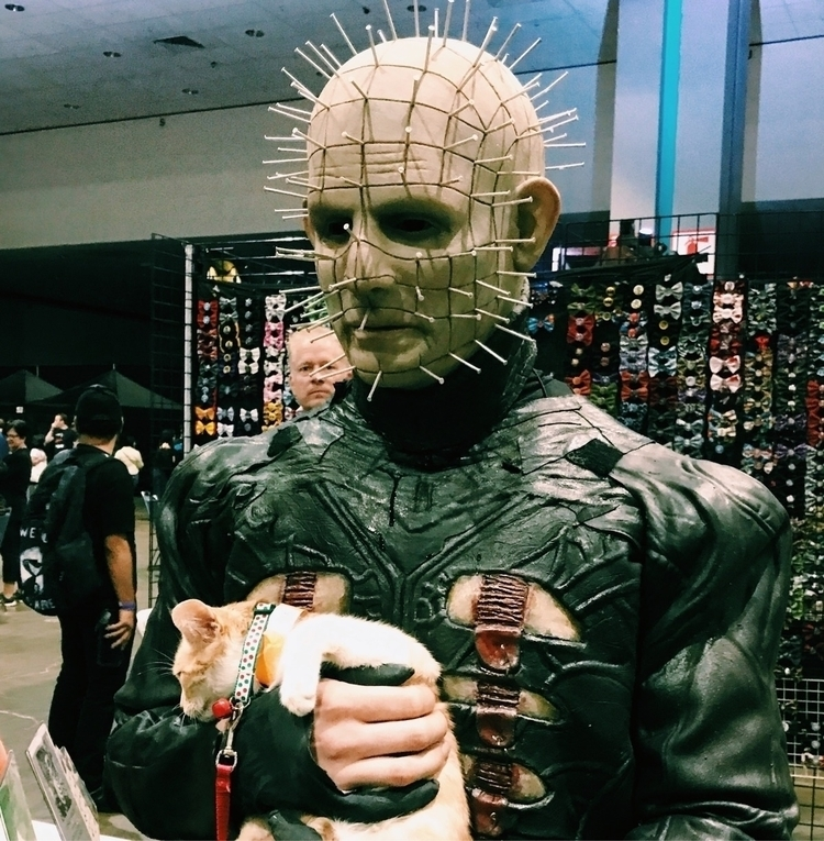 Pinhead cute kitty. ScareLA tod - eheyer | ello
